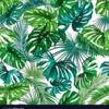 tropicalqueens